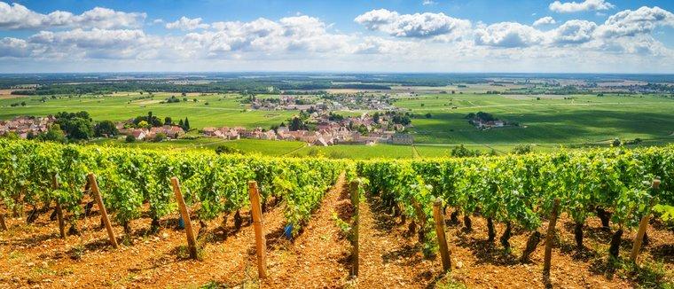Виноградная пастораль Бургундии